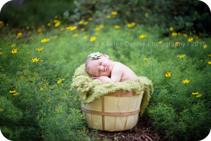brevard newborn photographer
